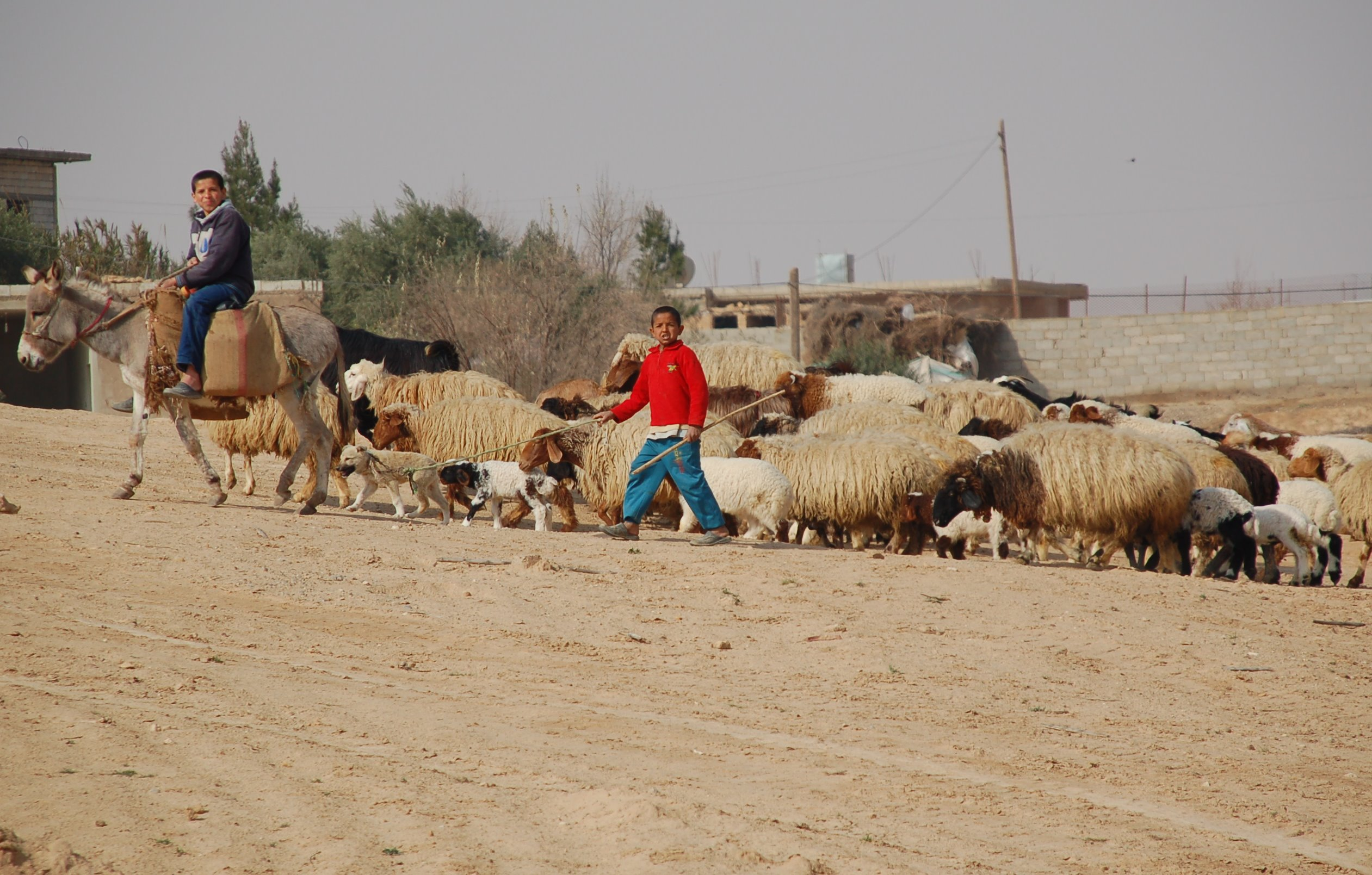 Listenwise - Syrian Refugees Jordan.jpg